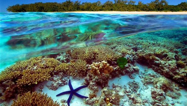 Australia Great Barrier Reef